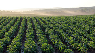 Using SWAT MAPS in Potato Production