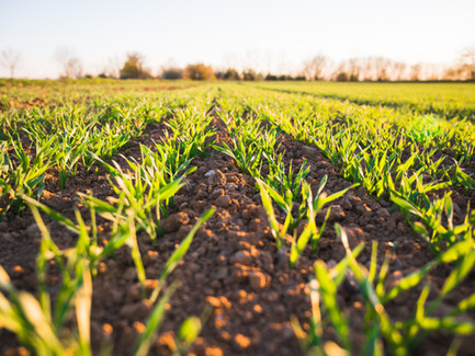 Putting Nitrogen in the Crop, Not the Air