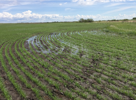 Benefits of Variable Rate: Achieving Target Plant Populations