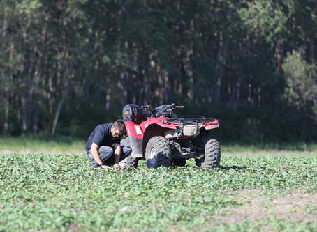 Early Season Weed Control in Canola
