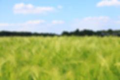 close-up-crop-cropland-299031.jpg