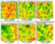 Biomass Maps, Normalized Average of Biomass Maps, Satellite Imagery
