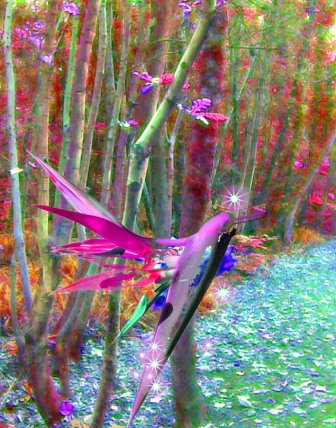 Oak Leaf Dragonfly