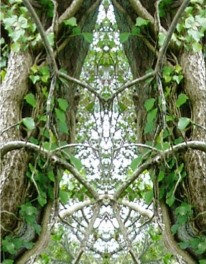 Vista Tree Seed