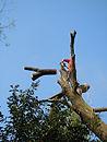 Sualto Tree climbing Potature e abbattimenti di piante