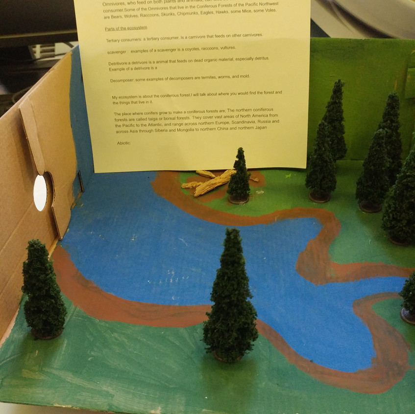 The Grade 7's utilized their research & artistic abilities in this classic ecosystem diorama assignment.