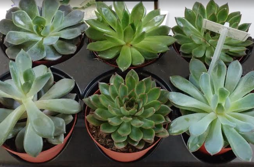 Plants - 8$