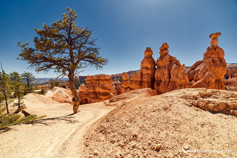 Pine and three rocks, Bryce Canyon