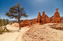 Pine and three rocks, Bryce Canyon