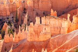 Bryce Canyon, rocks and wood
