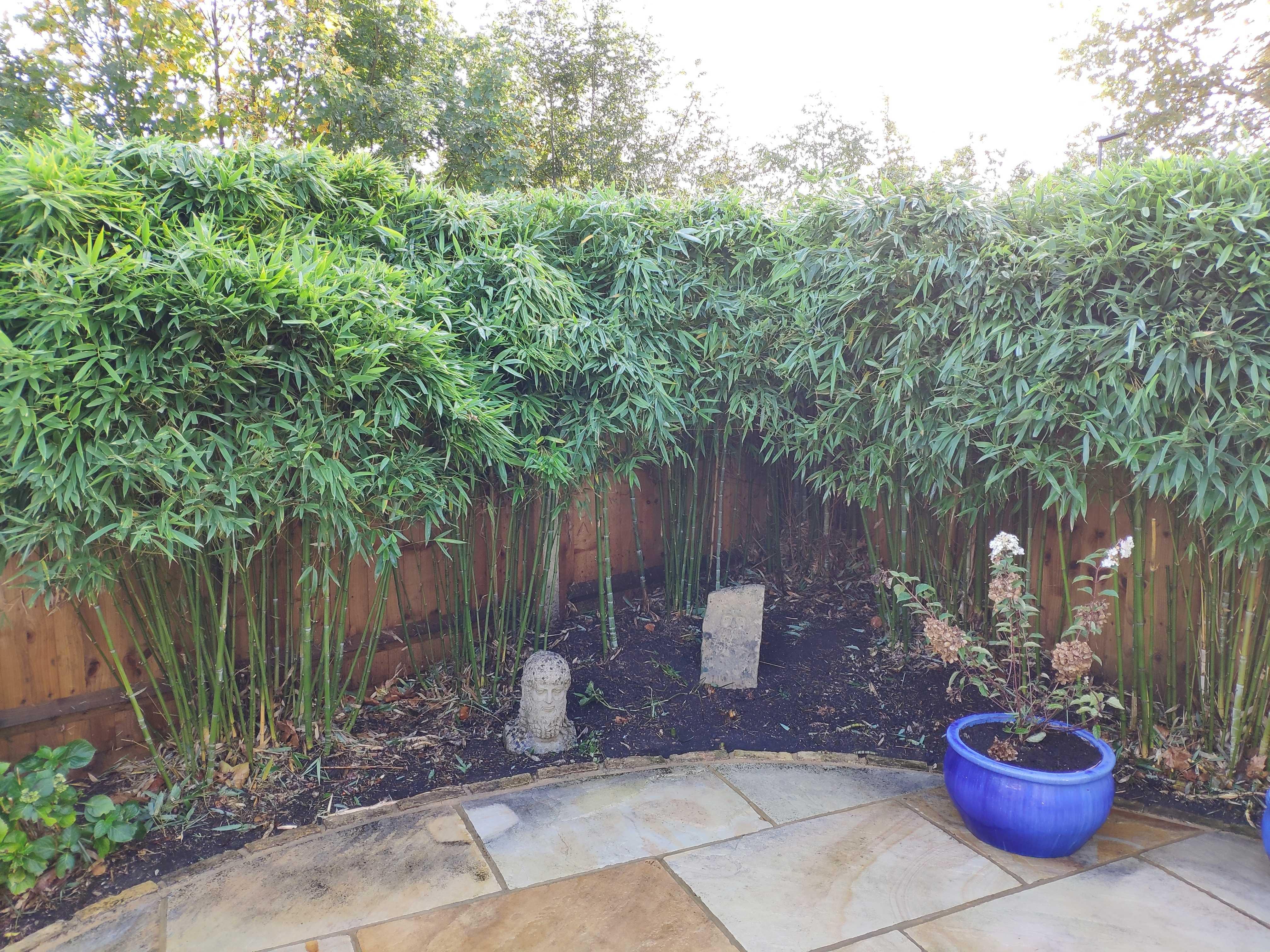 bamboo pruning