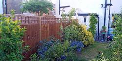 closeboard fence with trellis