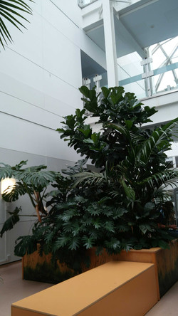 more palms
