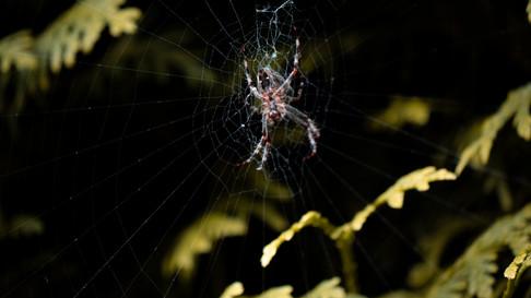 Spinne Hinten.jpg