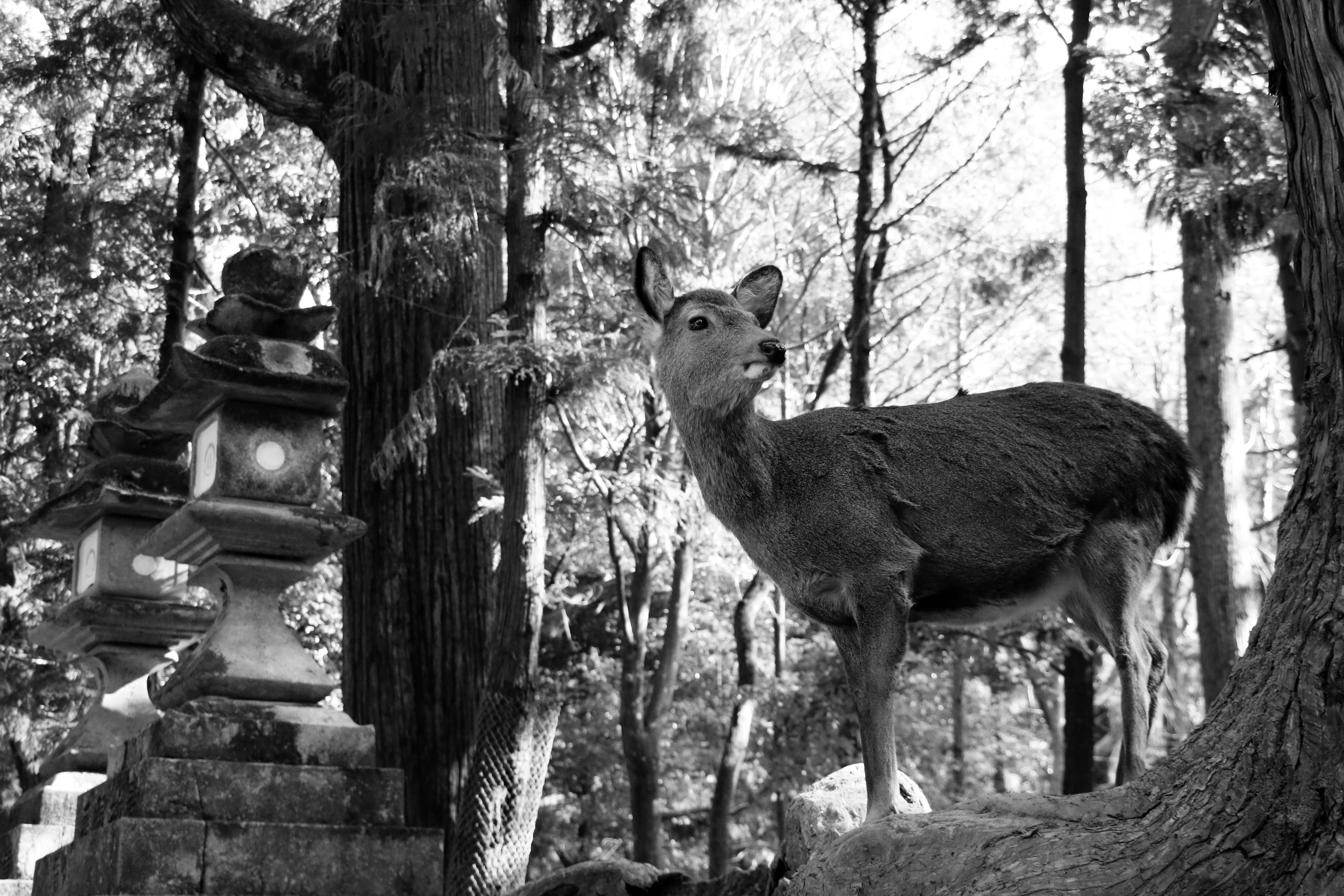 Nara - Japón