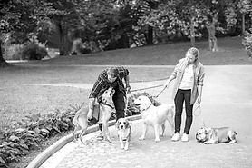 Dog Walking_edited_edited.jpg