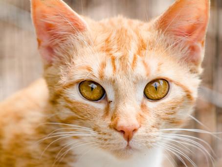 Heute dürfen gleich zwei unserer Katzen, dass 14.Türchen aufmachen