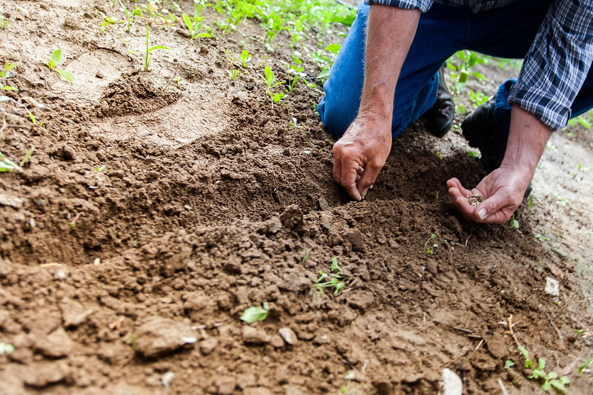 person planting seeds in soil