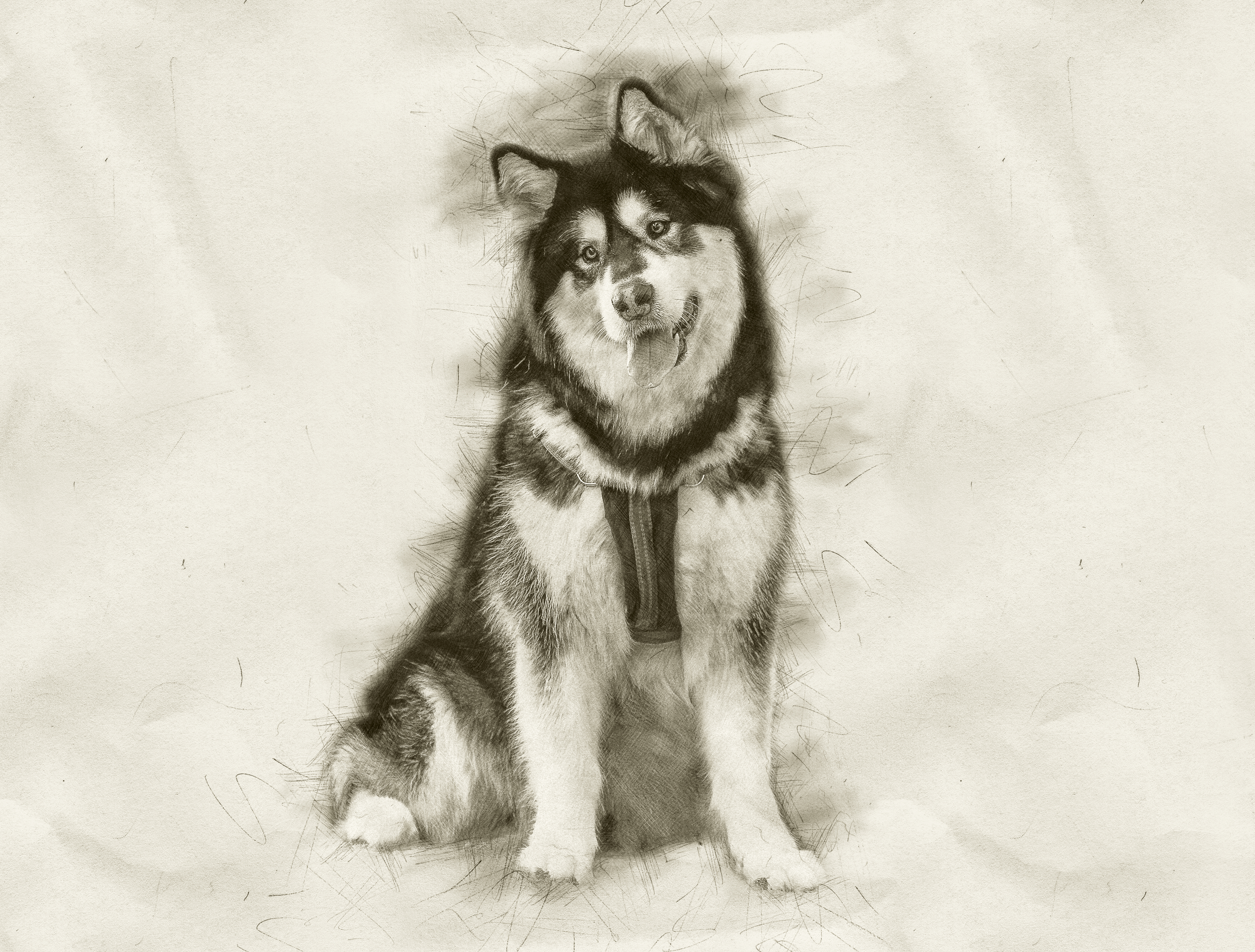 B&W Sketch