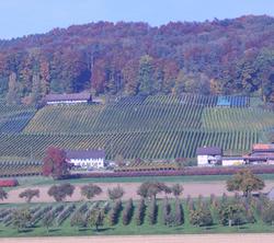 Weingut Wolfer