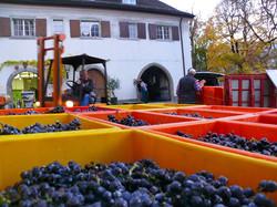 Weinbau von Tscharner AG