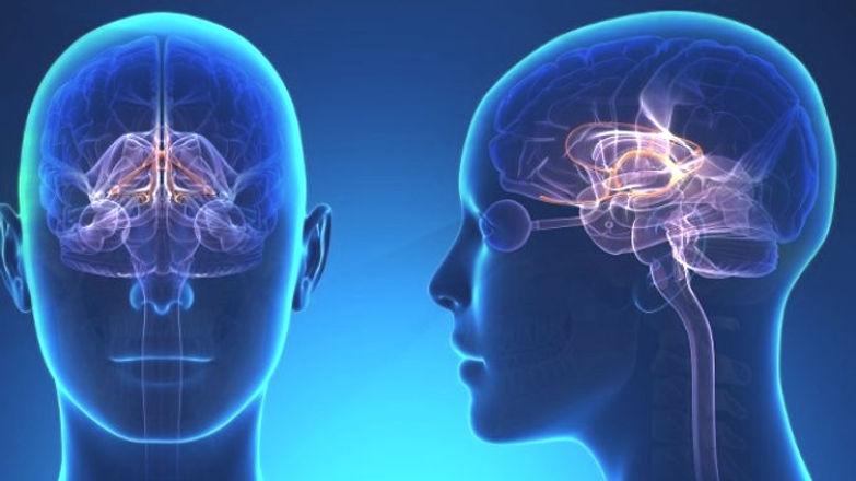 Sistema-limbico-anatomia-connessioni-e-funzioni-Psicologia-680x382_edited.jpg