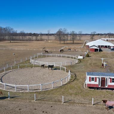 Trot Farm Auction (22).jpg