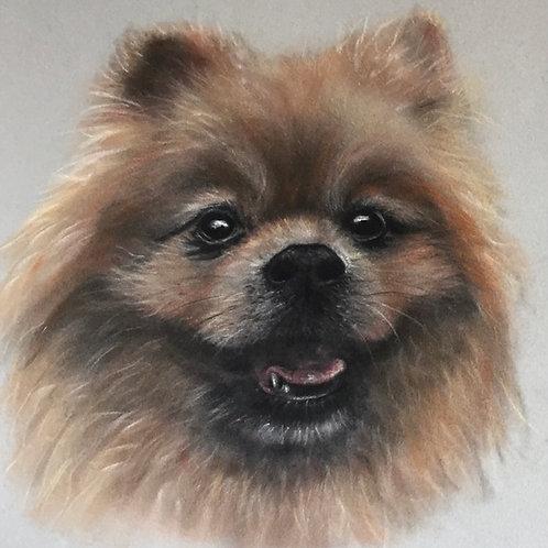 Original Pomeranian
