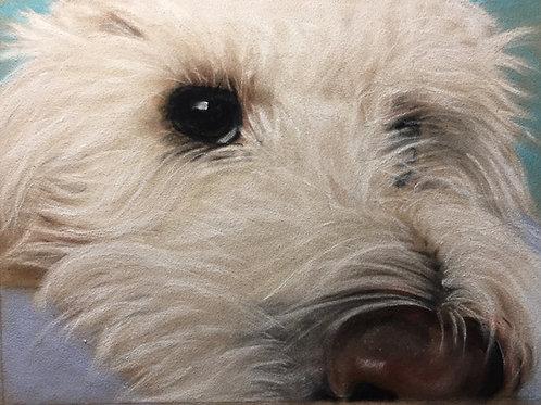 Poodle-Westie
