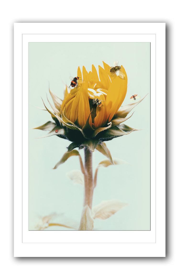 Sunflower Frame.jpg