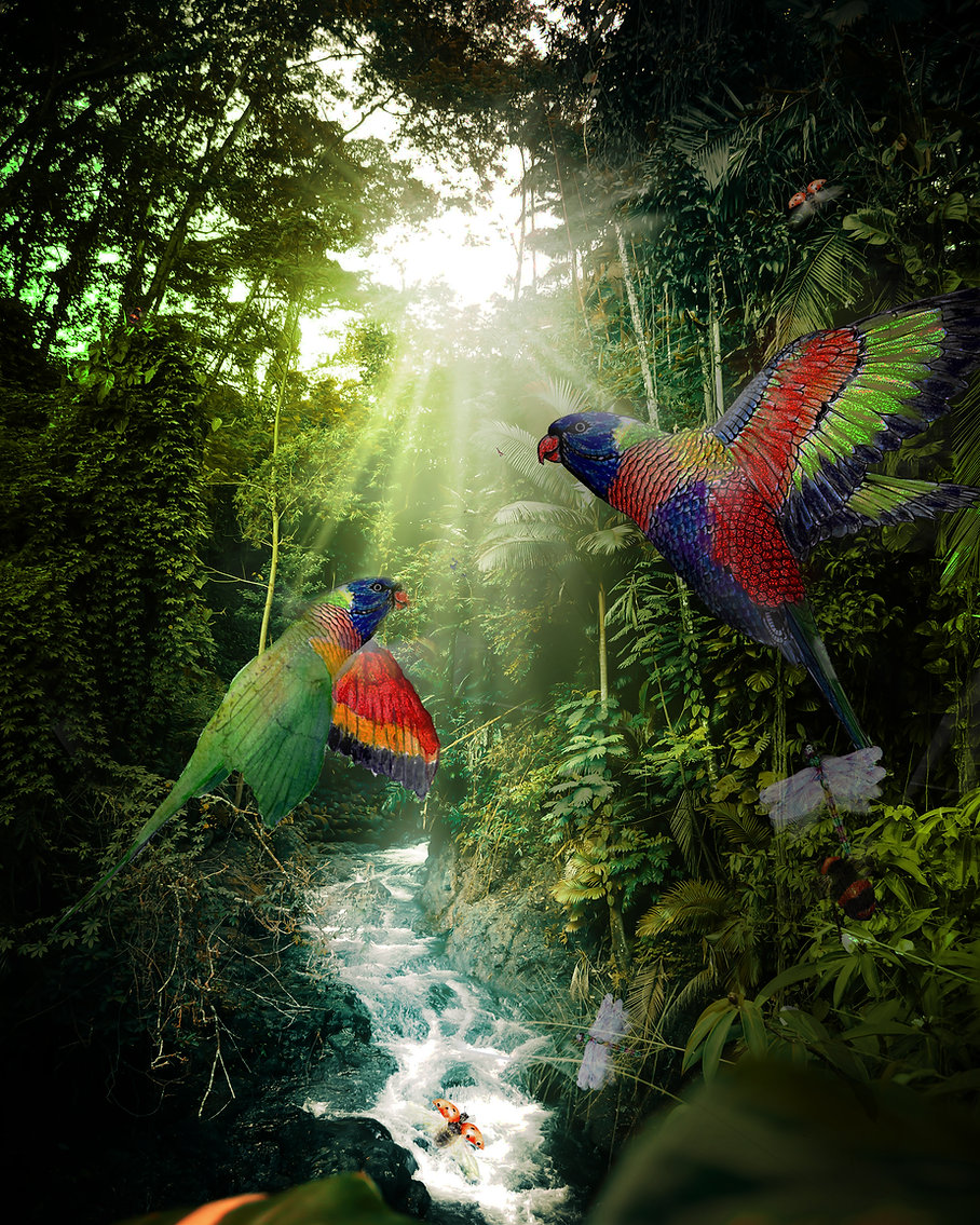 Parakeets Small.jpg