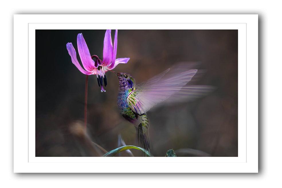 Hummingbird Frame copy.jpg