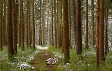 Kaarinan kaupungin metsäpolitiikasta