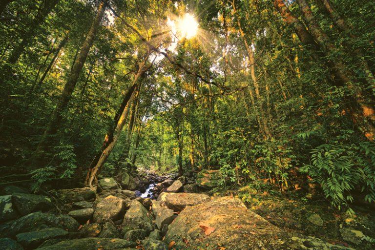 Kottawa Forest