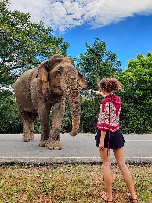 4 Days Essence Of Sri Lanka
