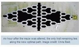Maze3_edited.jpg