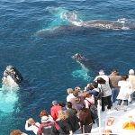 mirissa-whale-watching-150x150.jpg