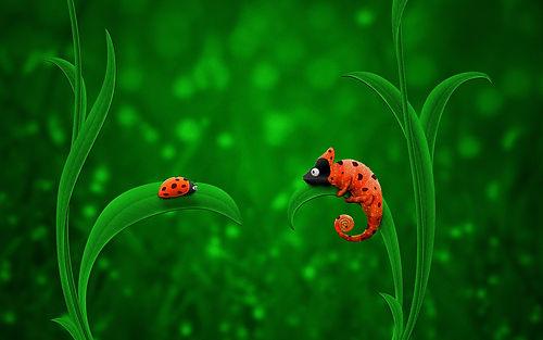 ladybug_chameleon-2560x1600.jpg