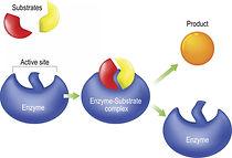 enzyme-lock-and-key-model.jpg
