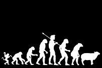 darwin-evolution.jpg