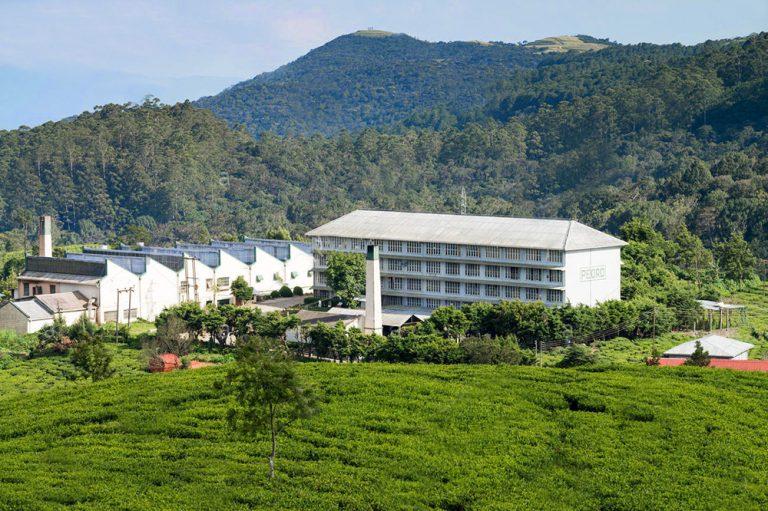 Pedro Tea Factory