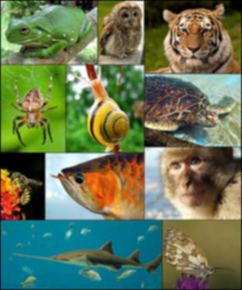 zoology.jpg