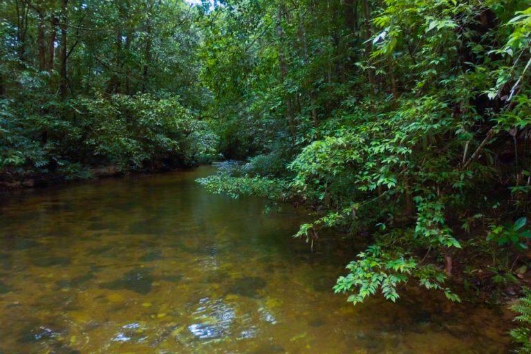 Kanneliya Forest