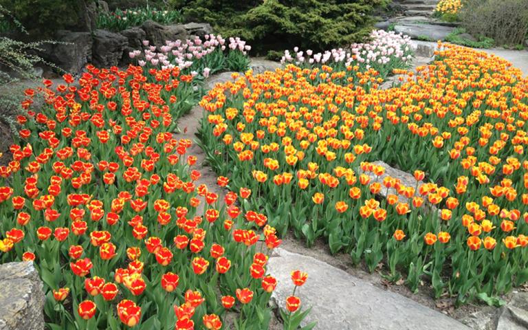 Haggala Botanical Garden