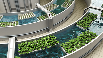 Ultra modern indoor aquaponic system plants in containers floating above small fish swimming below