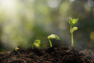 Three graduated sprouts emerging from rich soil, blurred background