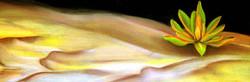 Desert Breath-pastel 16x36-$250.jpg