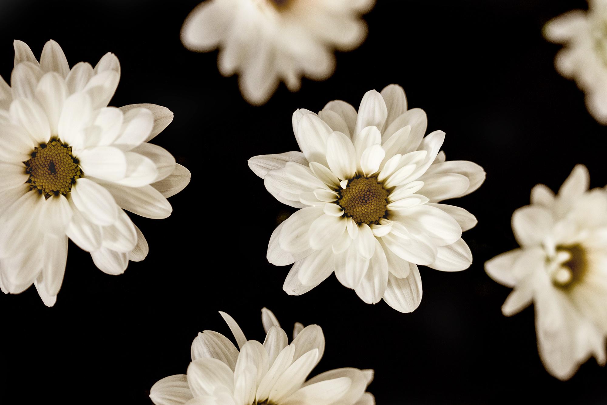 Fleur02 site Cecile Site Size