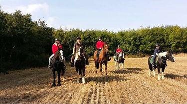 Group horse trek at Corballis forest in Dublin