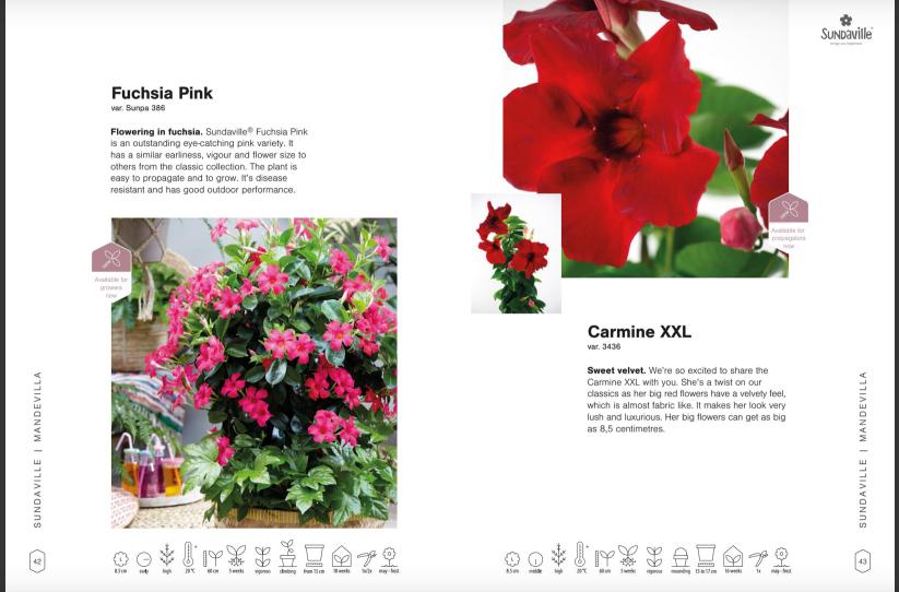 MNP flowers brochure
